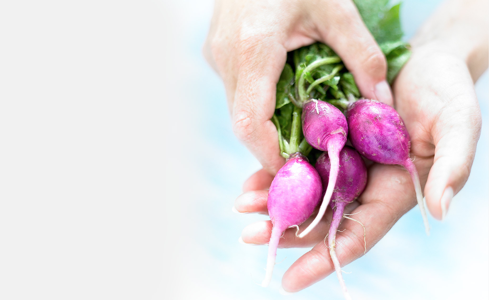 Hands-Radishes_2_FULL